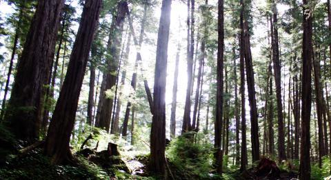 Metlakatla forest